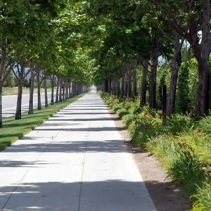 Commercial Tree Care along a sidewalk